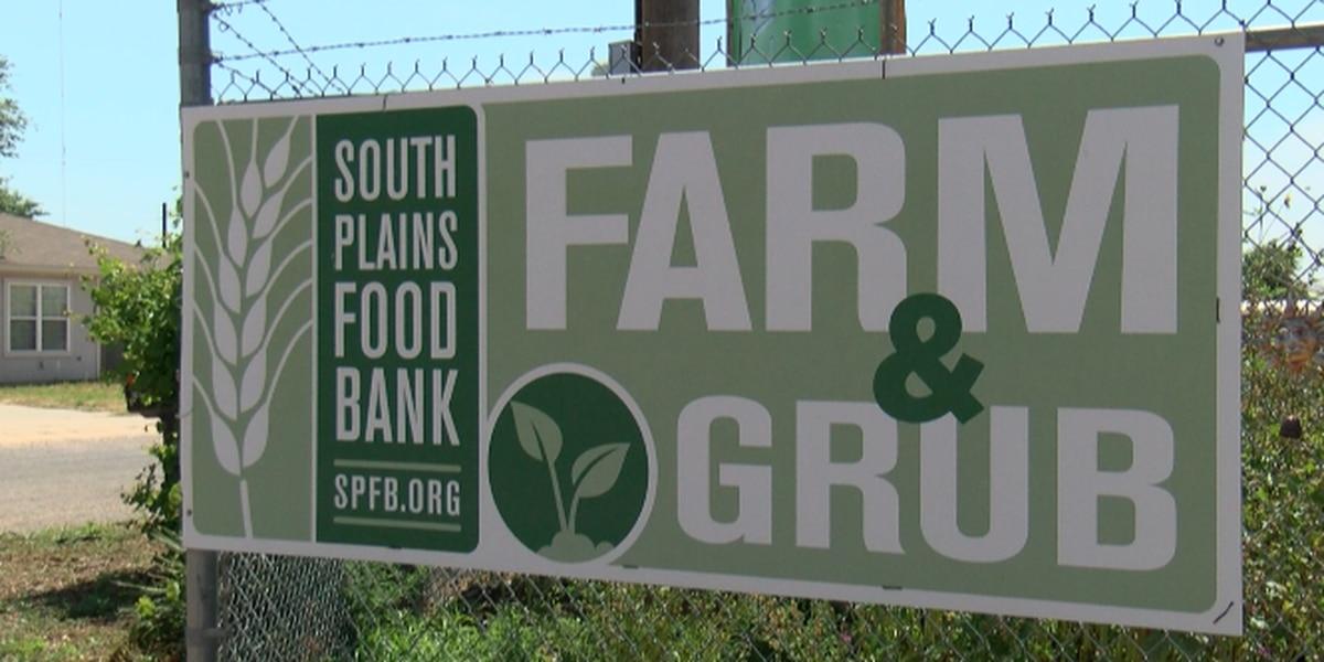 Hailstorm destroys crops at Grub Farm, South Plains Food Bank seeking donations