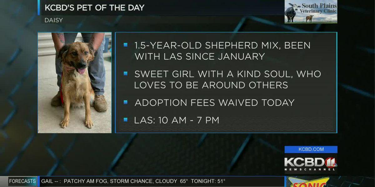 KCBD's Pet of the Day: Meet Daisy