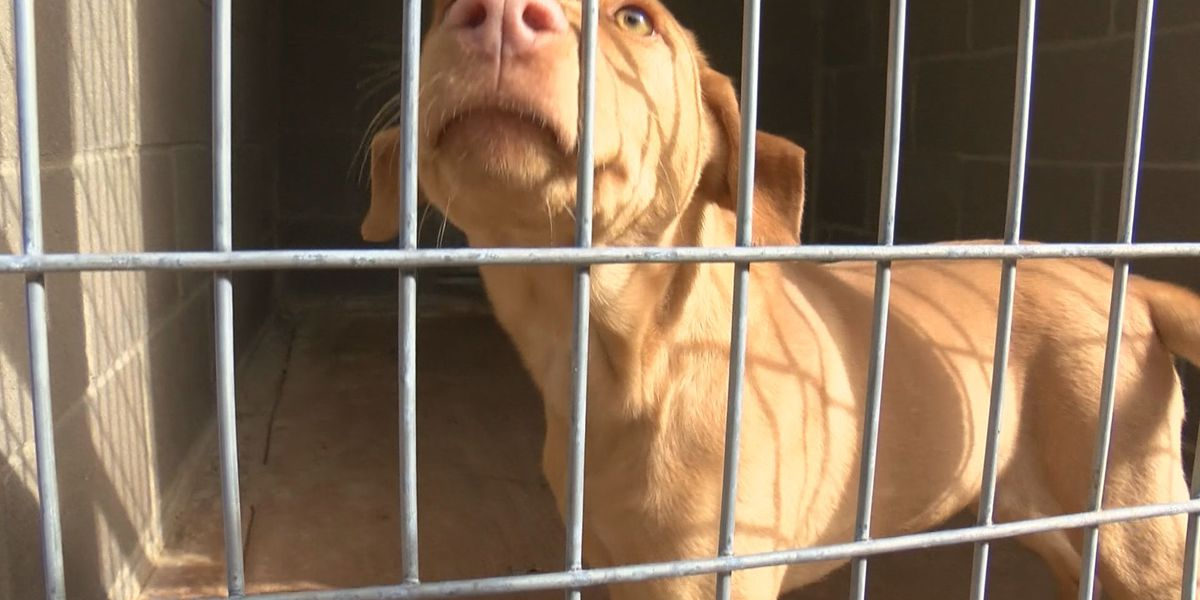 No-kill dog rescue says adoptions are down because of an impassable road