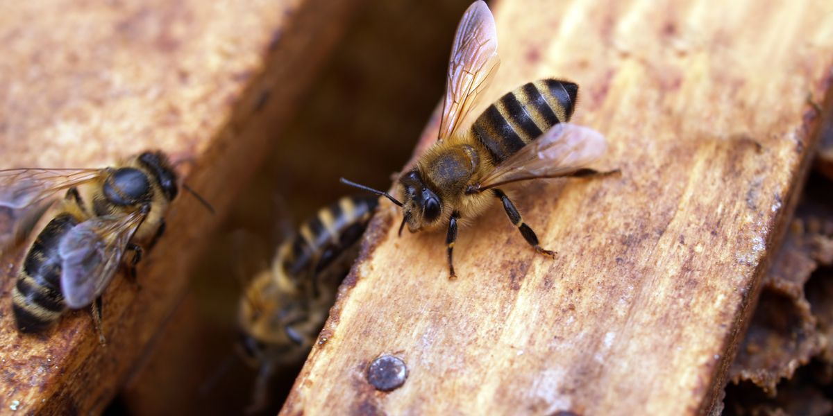 Beekeepers remove hive from Hale Center church