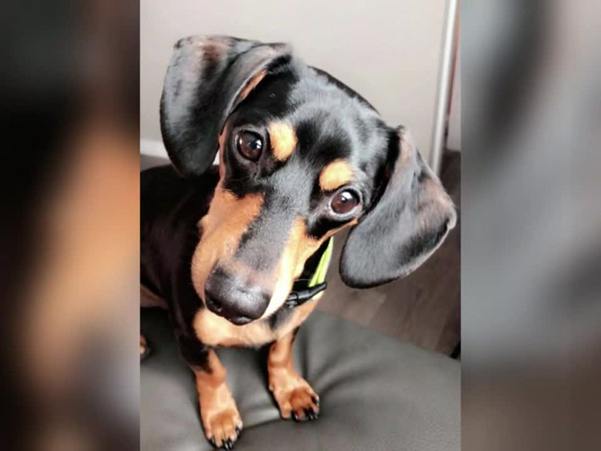 A woman says a vet put her dog to sleep by mistake