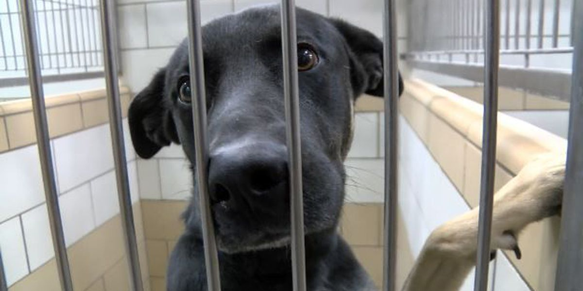Animal shelter appreciation week shines light on local shelter pets