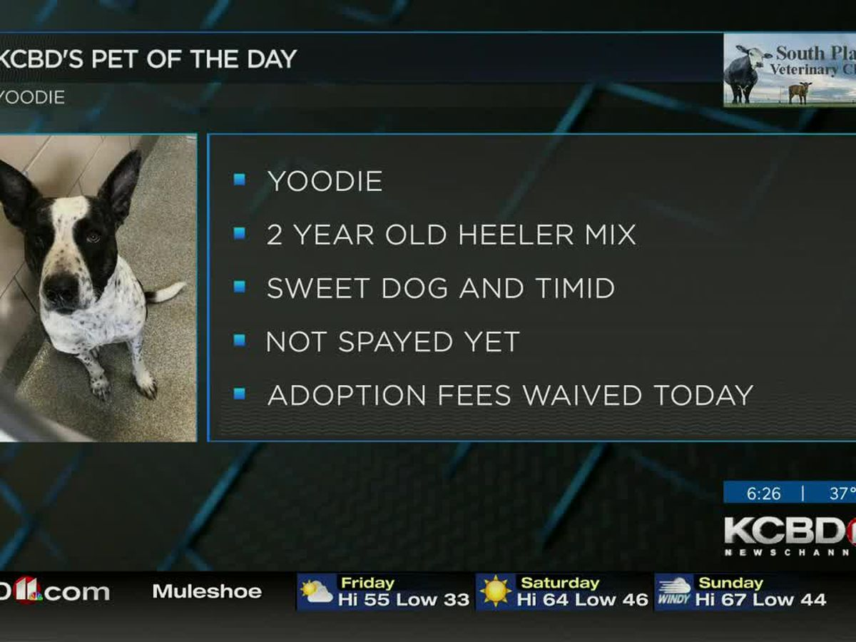 KCBD's Pet of the Day: Meet Yoodie