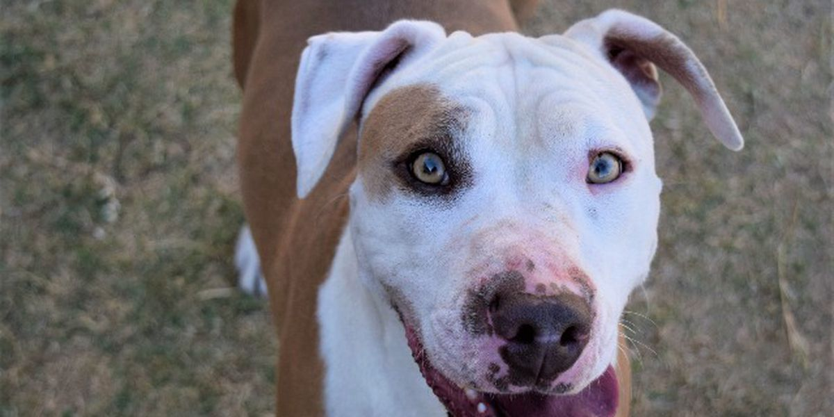 KCBD's Pet of the Day: Meet Piper