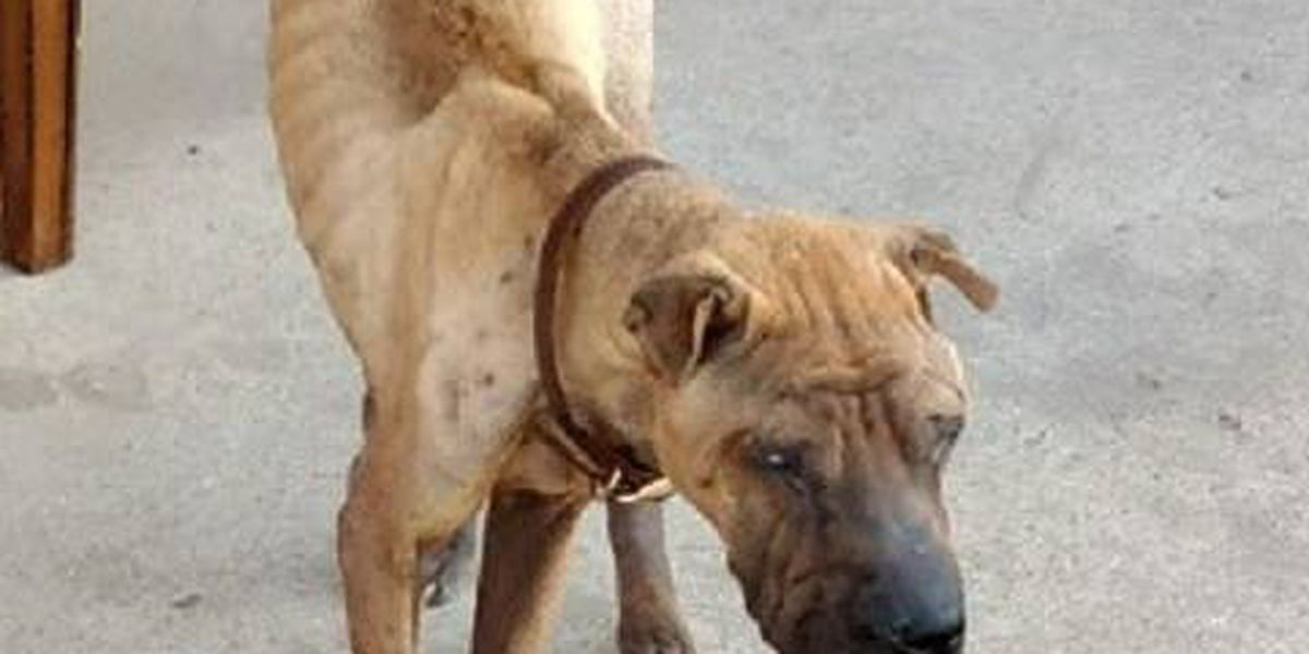 Lubbock police find starving dog shown in viral Facebook post