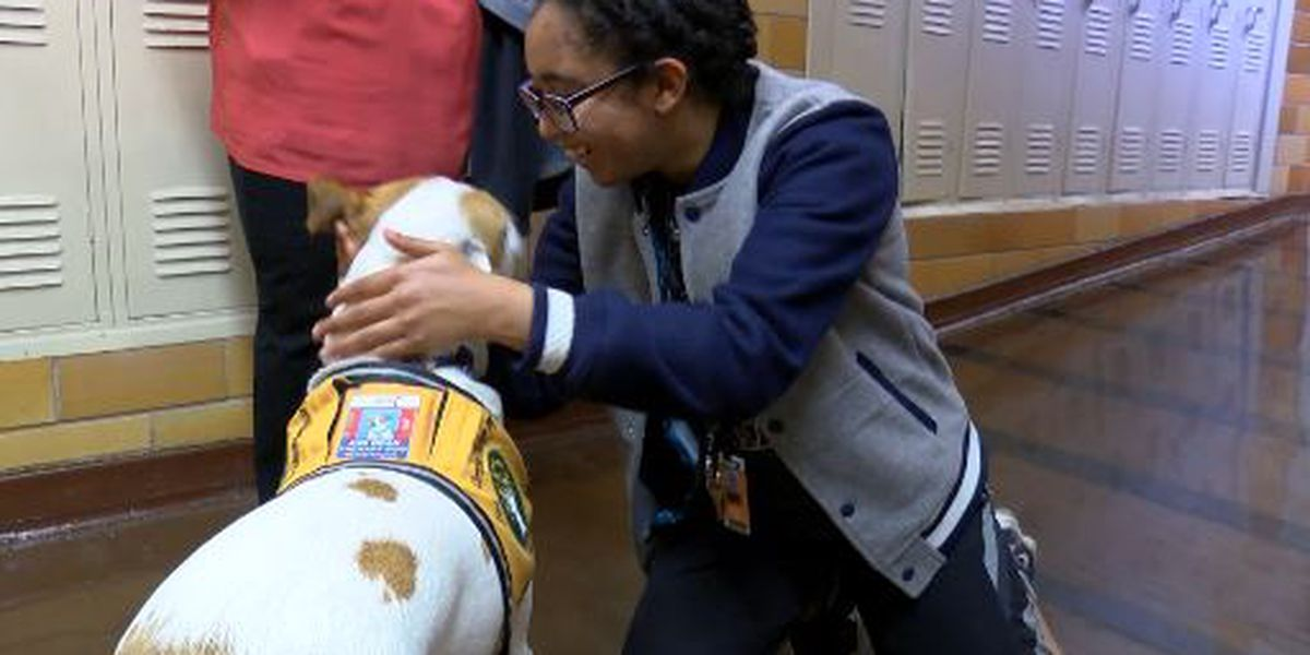 Therapy Dogs hit Lubbock ISD Hallways to alleviate stress