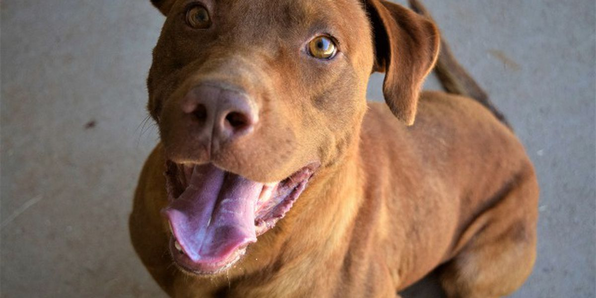 KCBD's Pet of the Day: Meet Bruce
