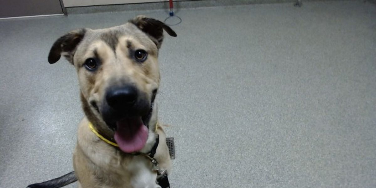 KCBD's Pet of the Day: Meet Tyson