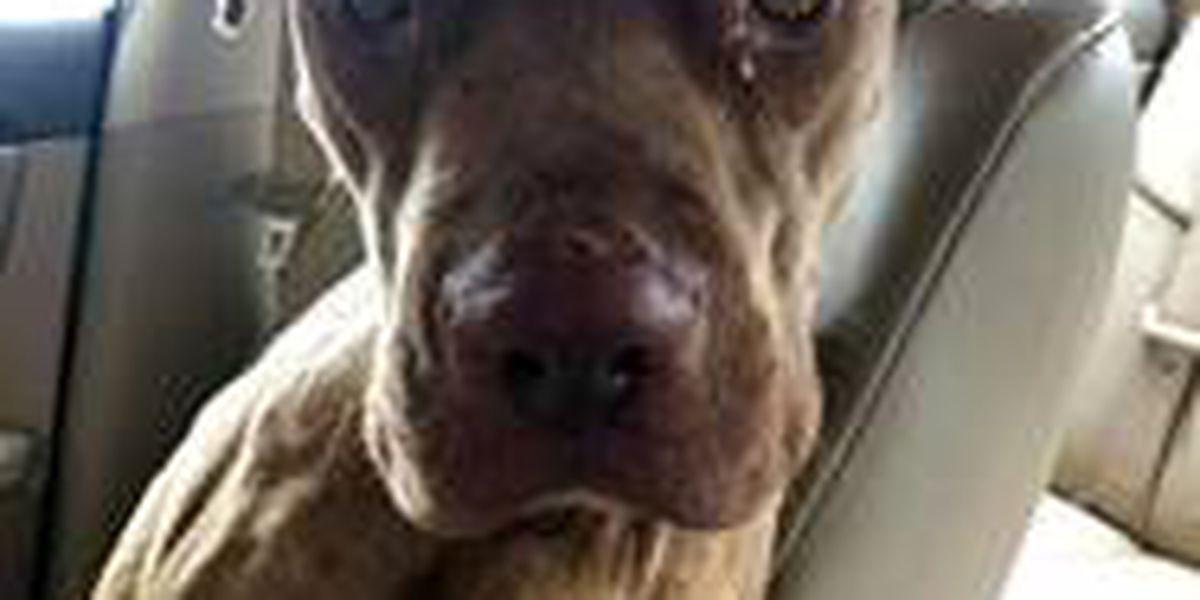 KCBD's Pet of the Day: Meet Barney