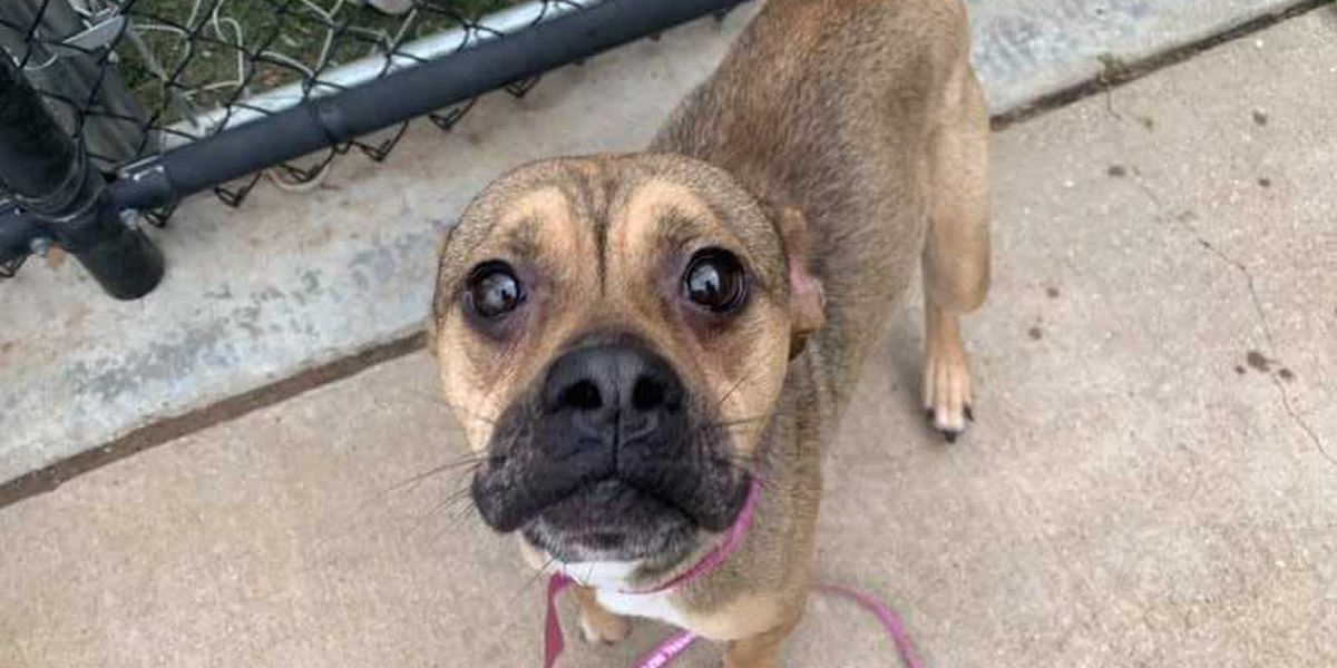 KCBD's Pet of the Day: Meet Mia