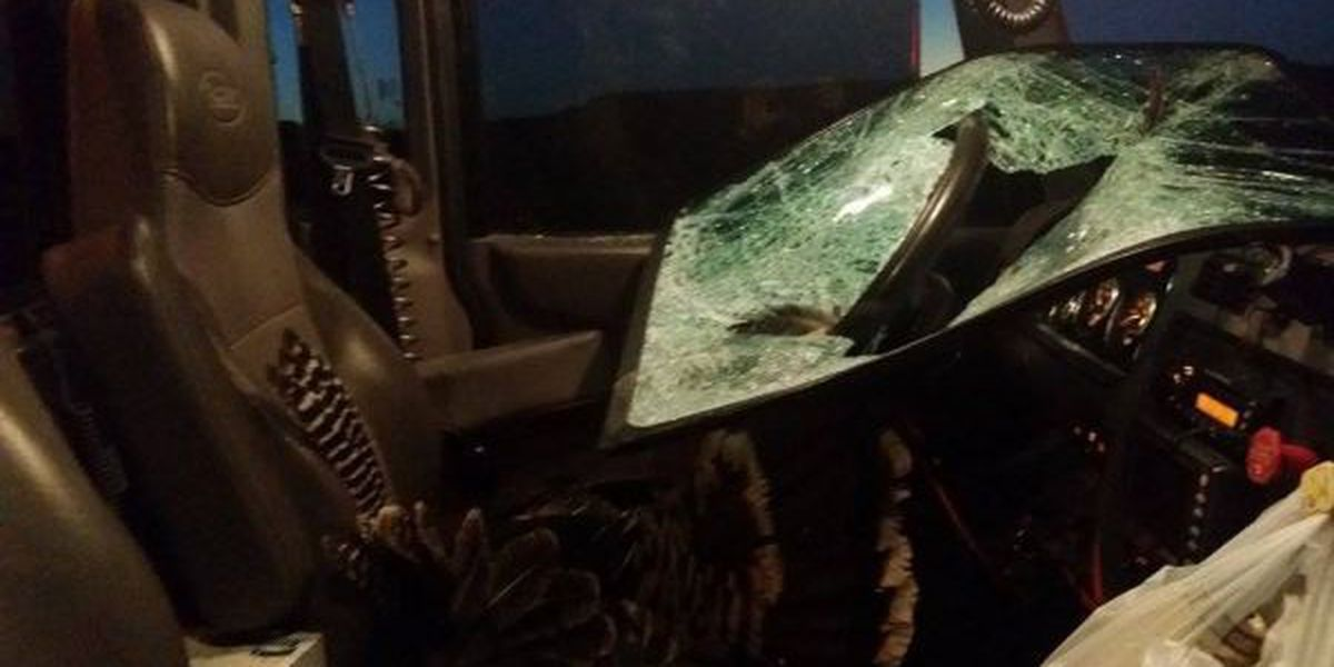 Turkey crashes through windshield, ends up as dinner for grateful family