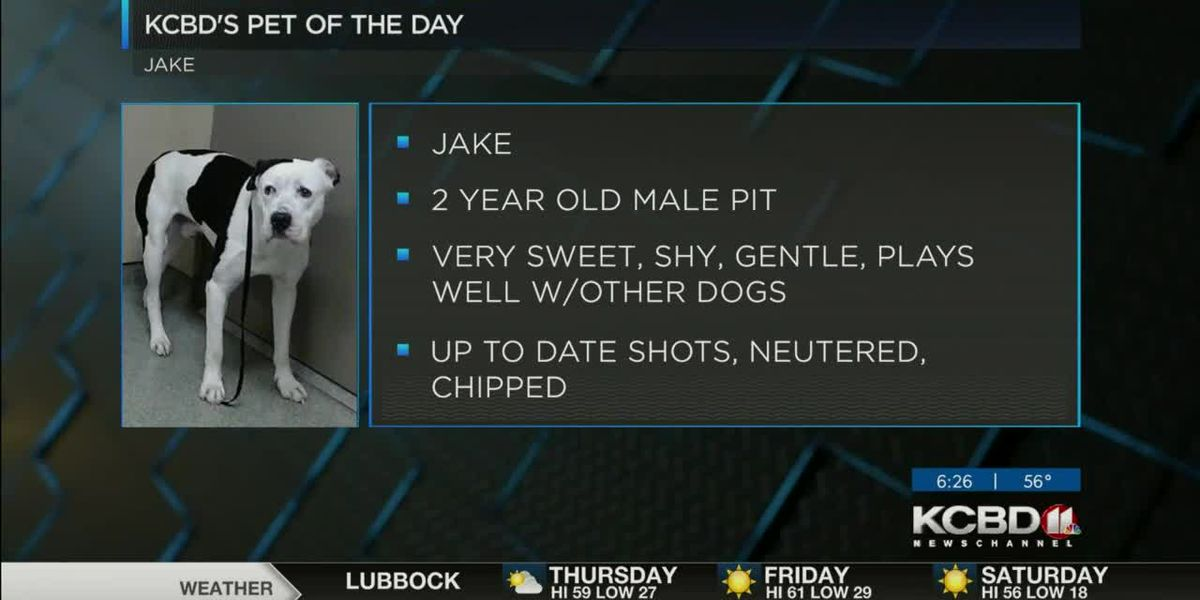 KCBD's Pet of the Day: Meet Jake