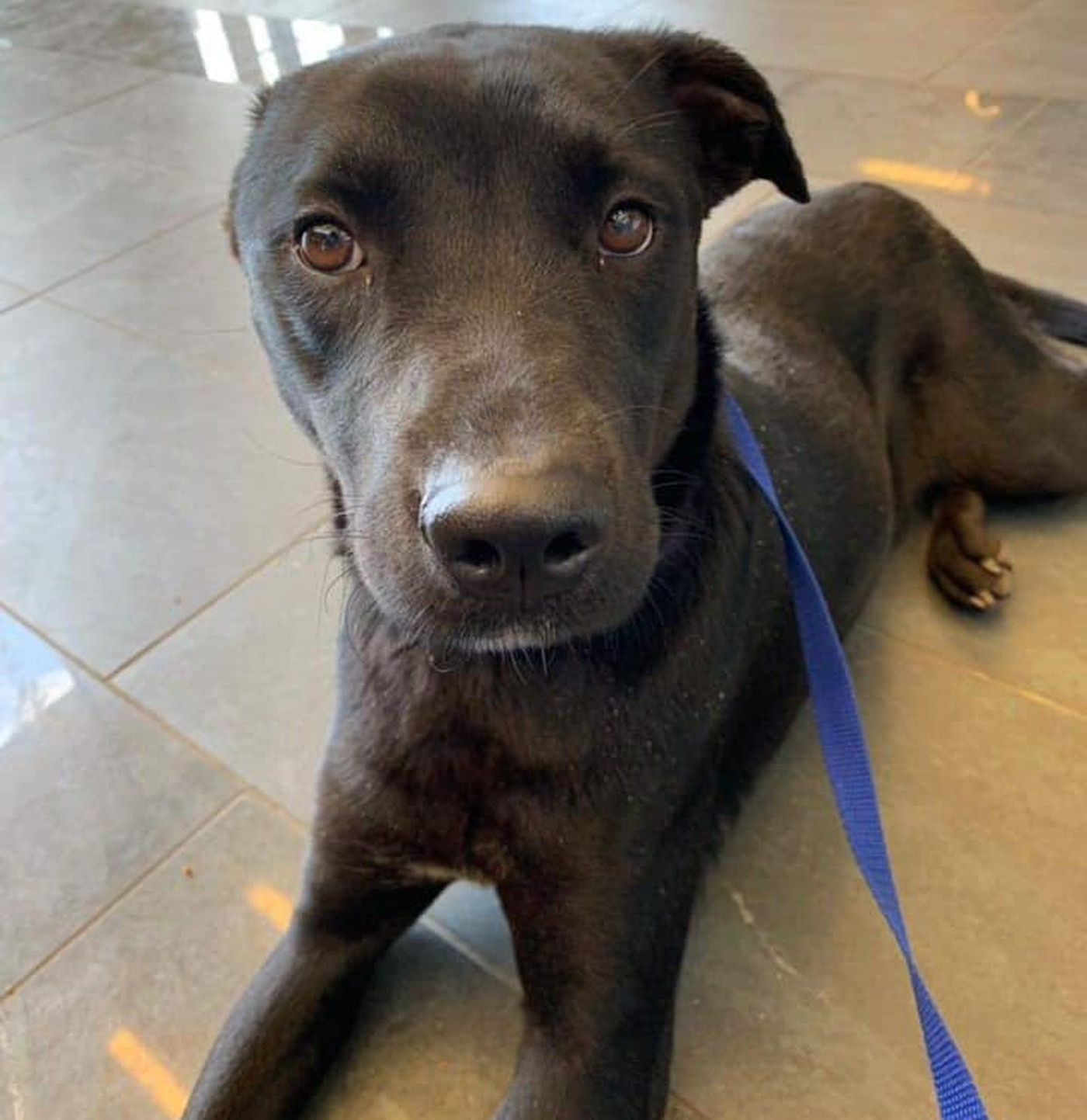 KCBD's Pet of the Day: Meet Shadow