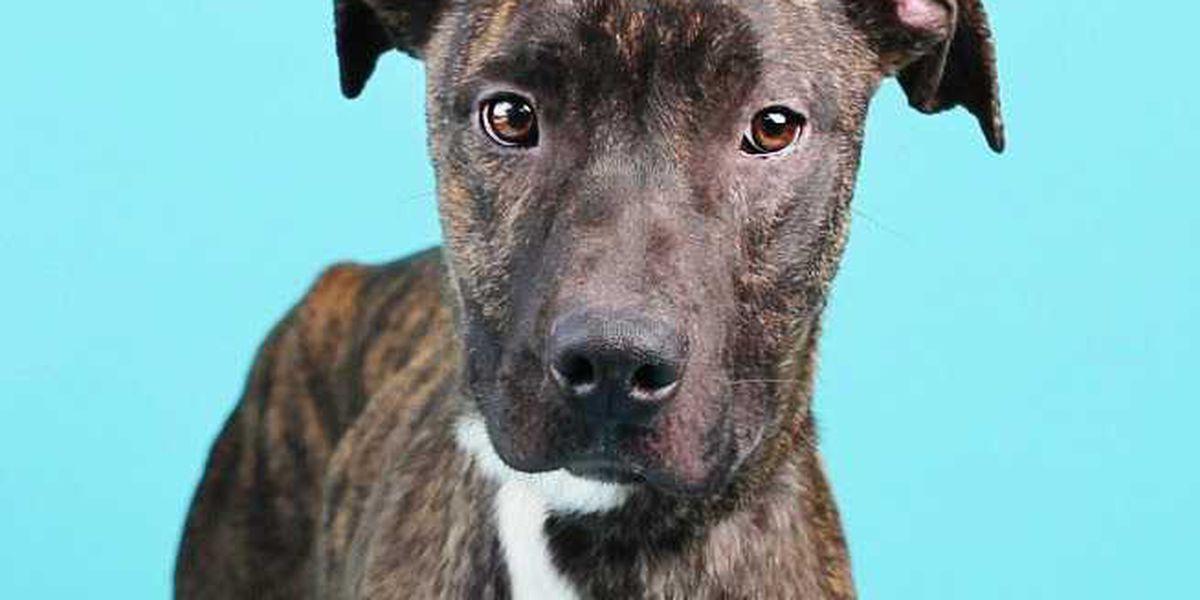 KCBD's Pet of the Day: Meet Maverick
