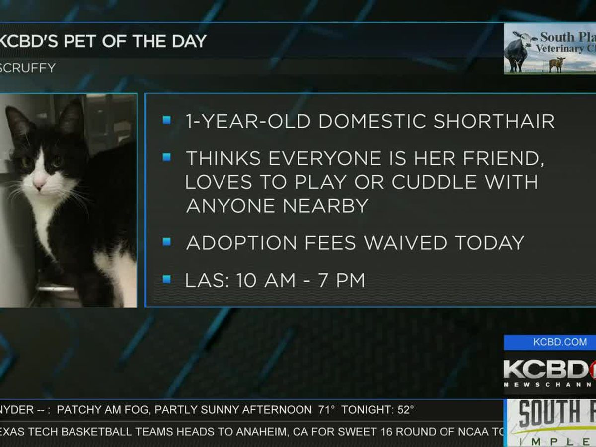 KCBD's Pet of the Day: Meet Scruffy