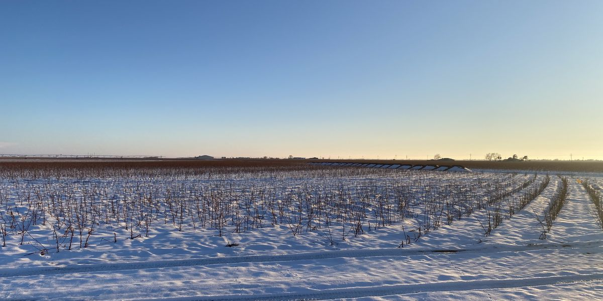 Snowfall is a blessing for farmers across the South Plains