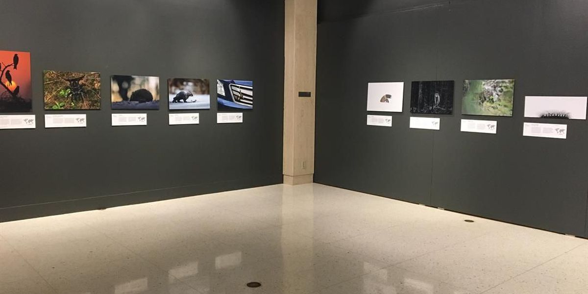 Museum of Texas Tech opens two major exhibitions examining wildlife