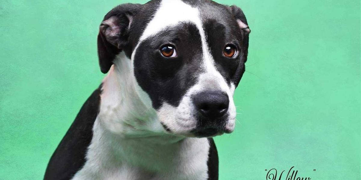 KCBD's Pet of the Day: Meet Willow