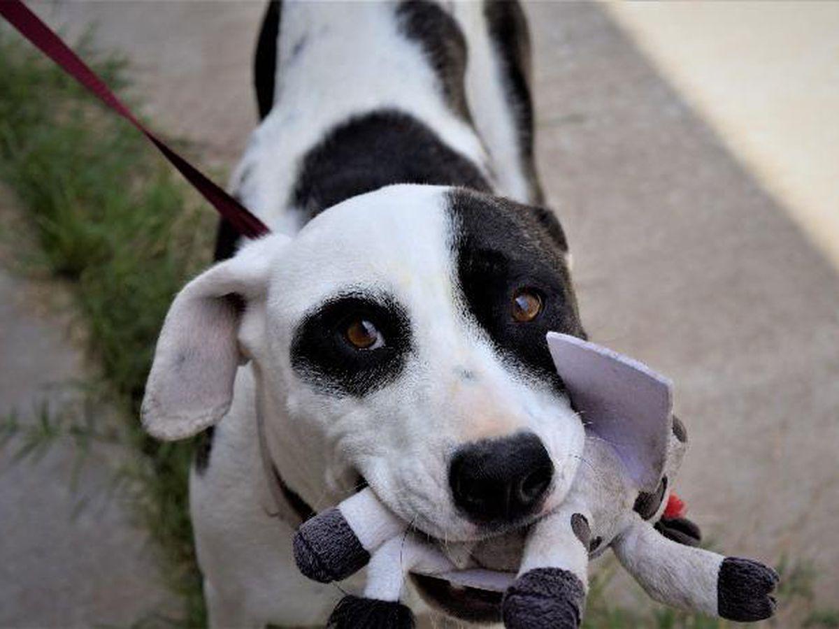 KCBD's Pet of the Day: Meet Nicolette