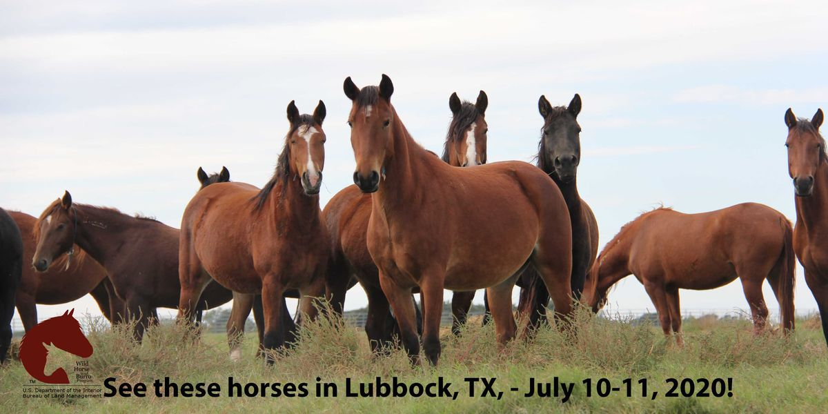 Adopt a wild horse or burro this weekend at the fair grounds