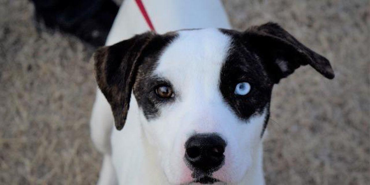 KCBD's Pet of the Day: Meet Brenda