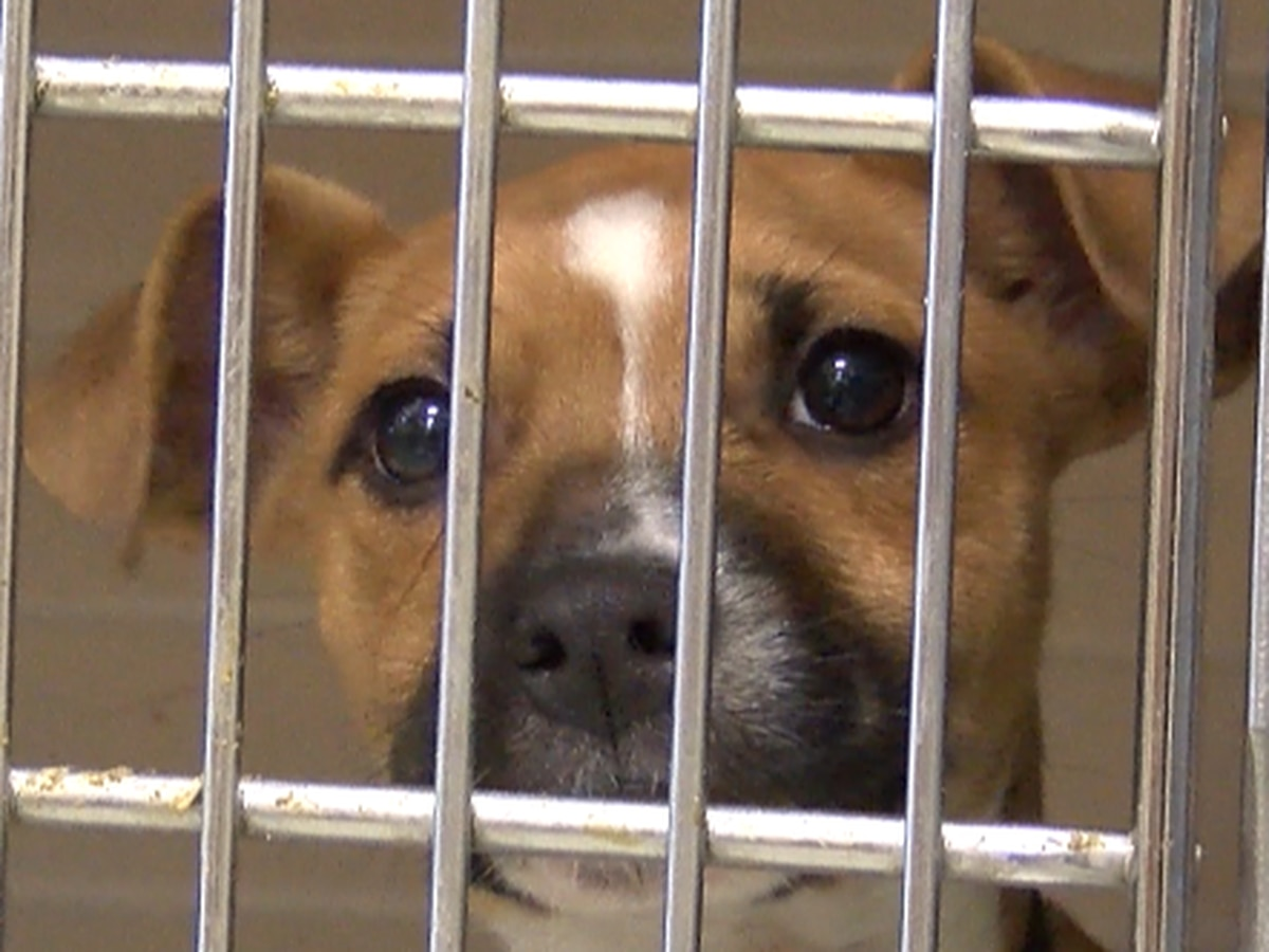 Hundreds of animals at the Lubbock Animal Shelter are in need of forever homes