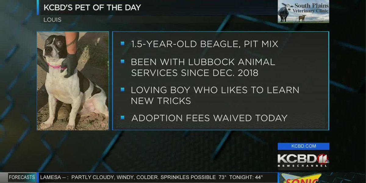 KCBD's Pet of the Day: Meet Louis