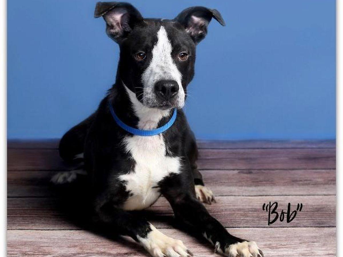 KCBD's Pet of the Day: Meet Bob