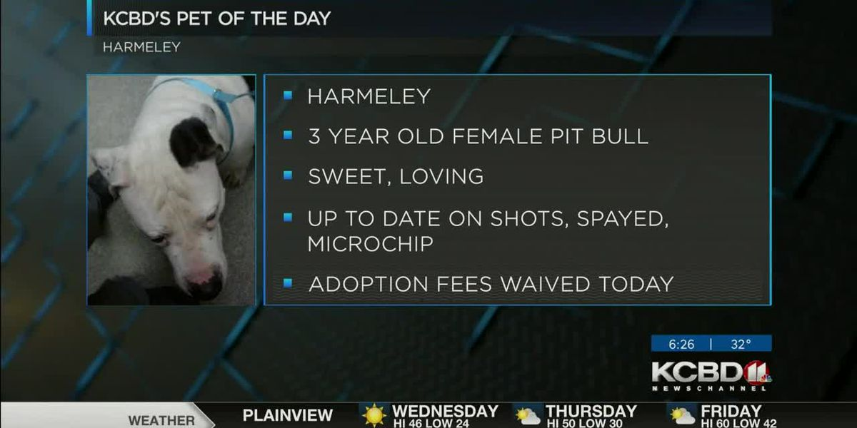 KCBD's Pet of the Day: Meet Harmeley