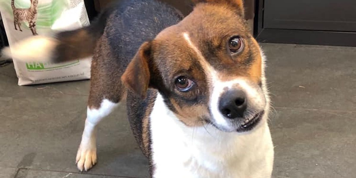 KCBD's Pet of the Day: Meet Dog