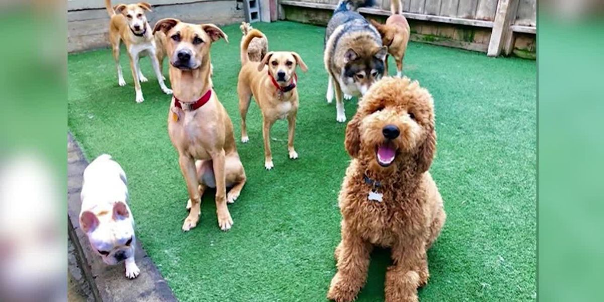 A doggie daycare is staying open to care for first responders' dogs