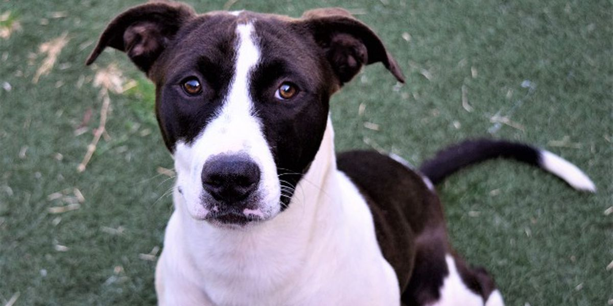 KCBD's Pet of the Day: Meet Laney
