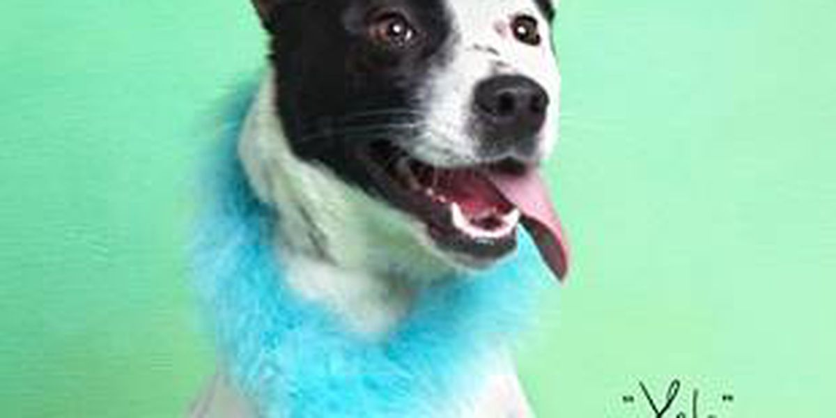 KCBD's Pet of the Day: Meet Xela