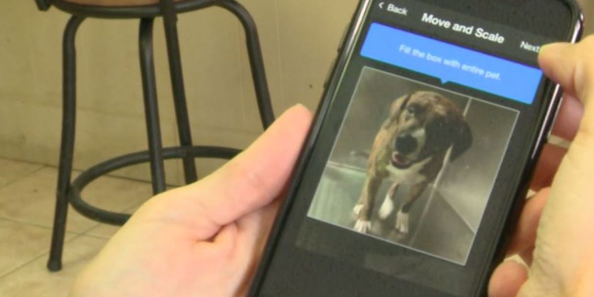 Shelter using facial recognition app to help reunite lost pets with families