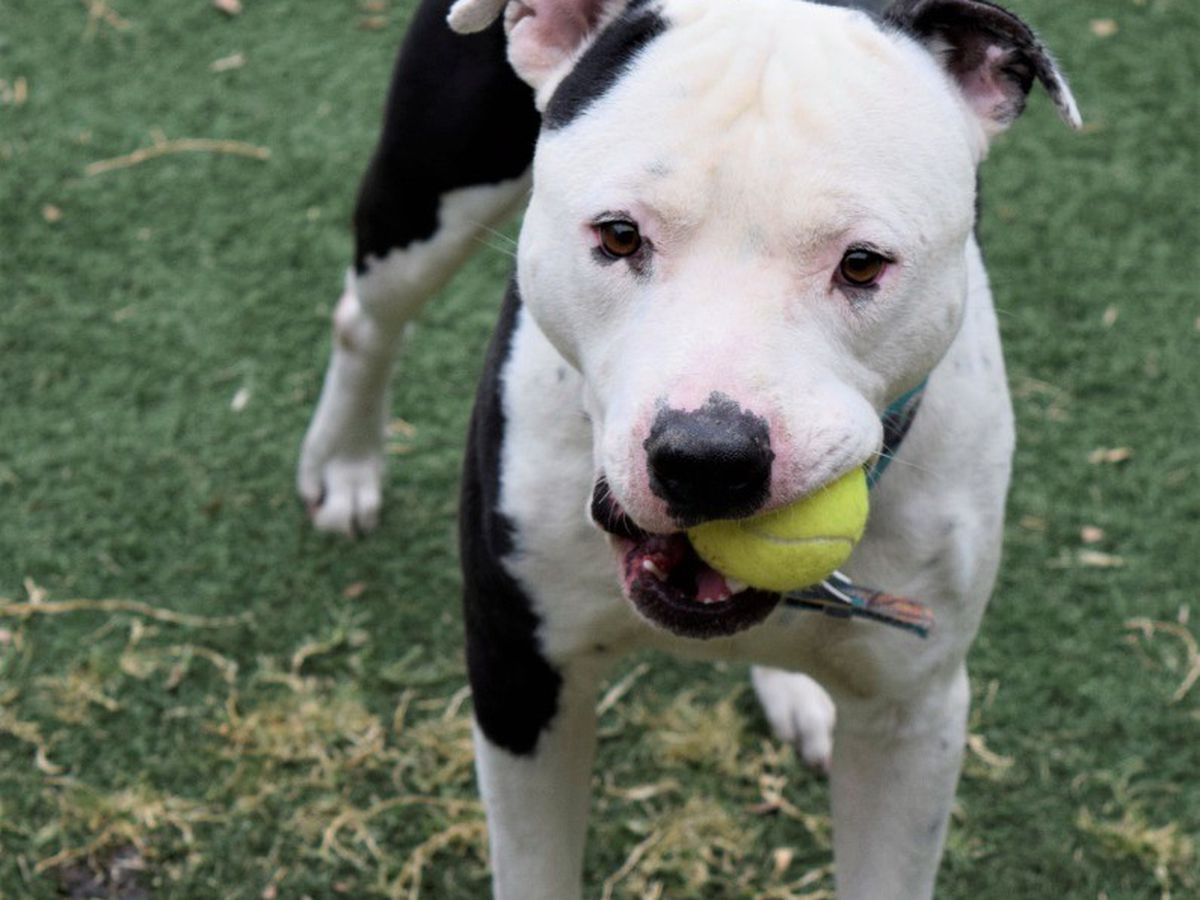 KCBD's Pet of the Day: Meet Bluto