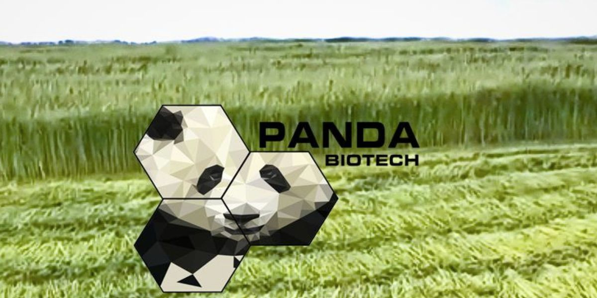 Panda Biotech cancels plans for 'Hemp Gin' in Shallowater