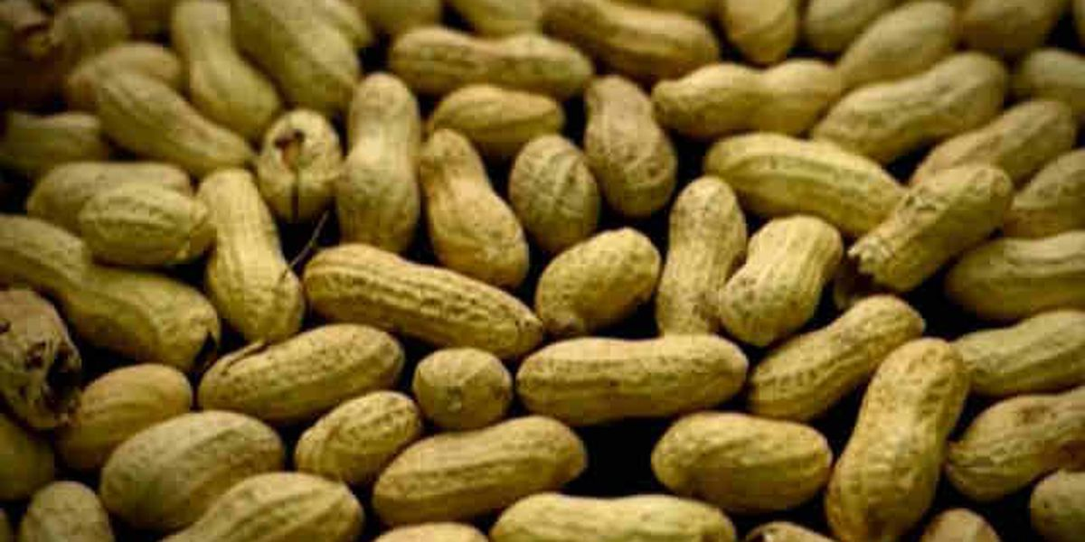 Texas Tech researchers given grant to combat peanut allergies