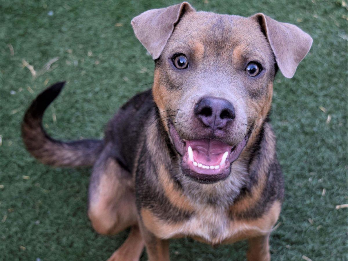 KCBD's Pet of the Day: Meet Boone