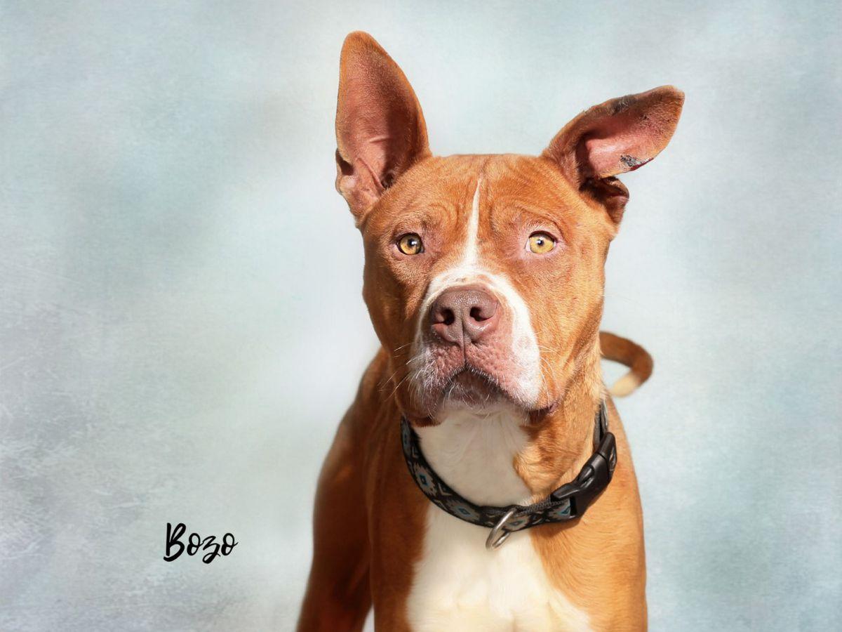 KCBD's Pet of the Day: Meet Bozo
