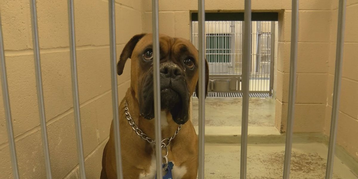 KCBD Investigates: Changes underway at Lubbock animal shelter as city searches for new director