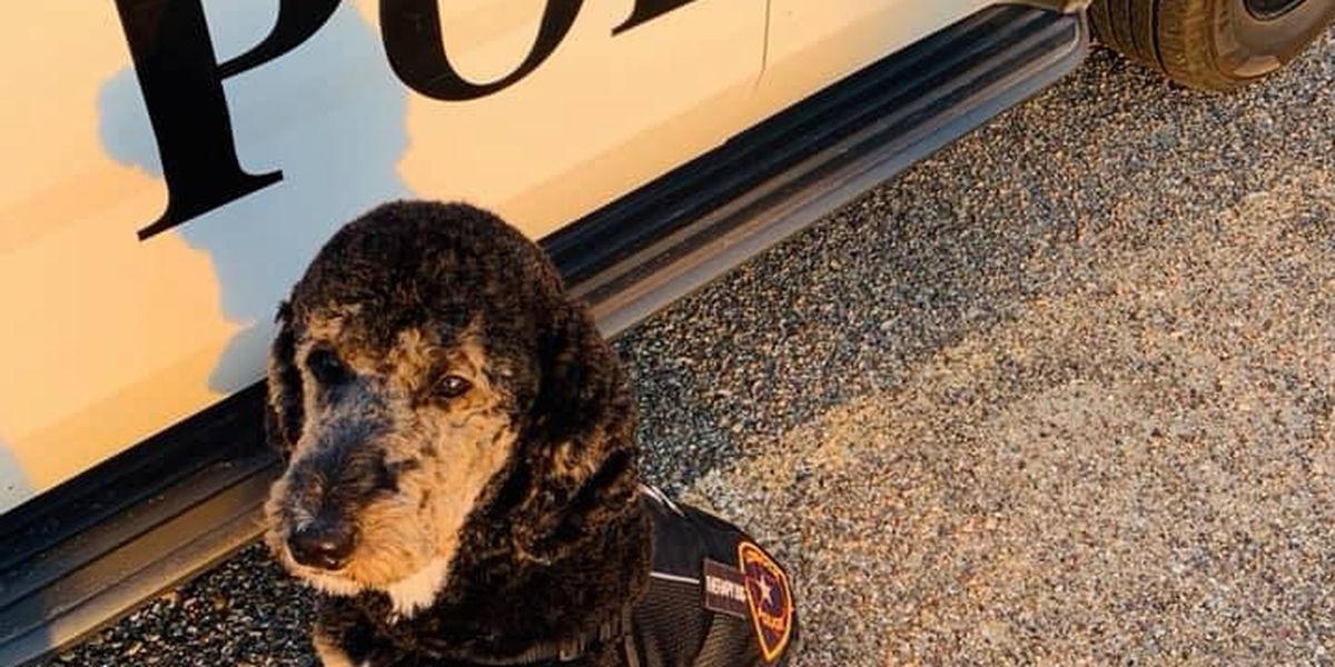 LPD's therapy dog gets official certification from therapy dog alliance