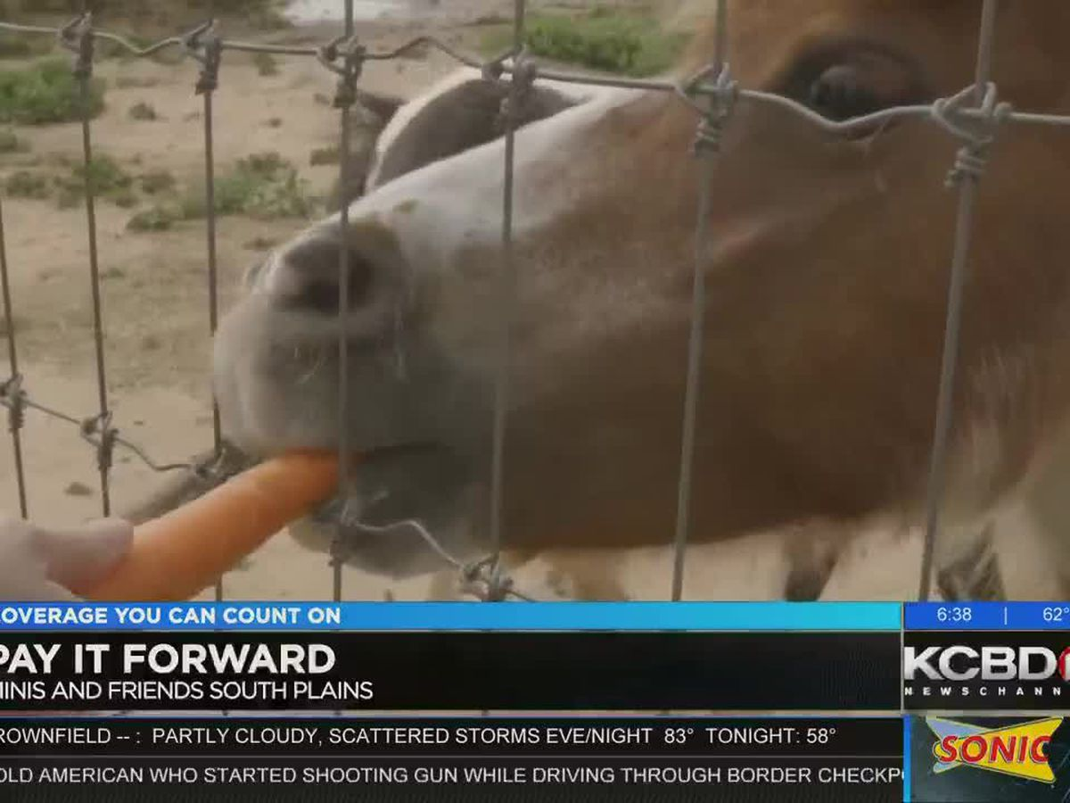 Pay It Forward: Large gift for mini horses