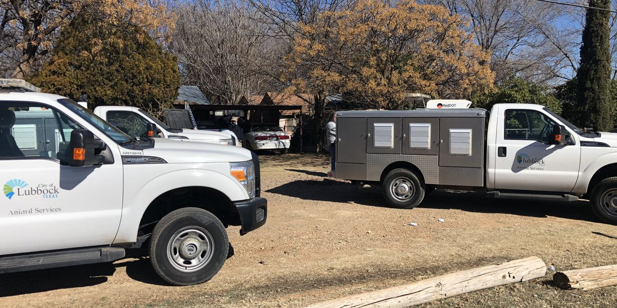 'Hoarding situation': 28 dogs removed from Southeast Lubbock home