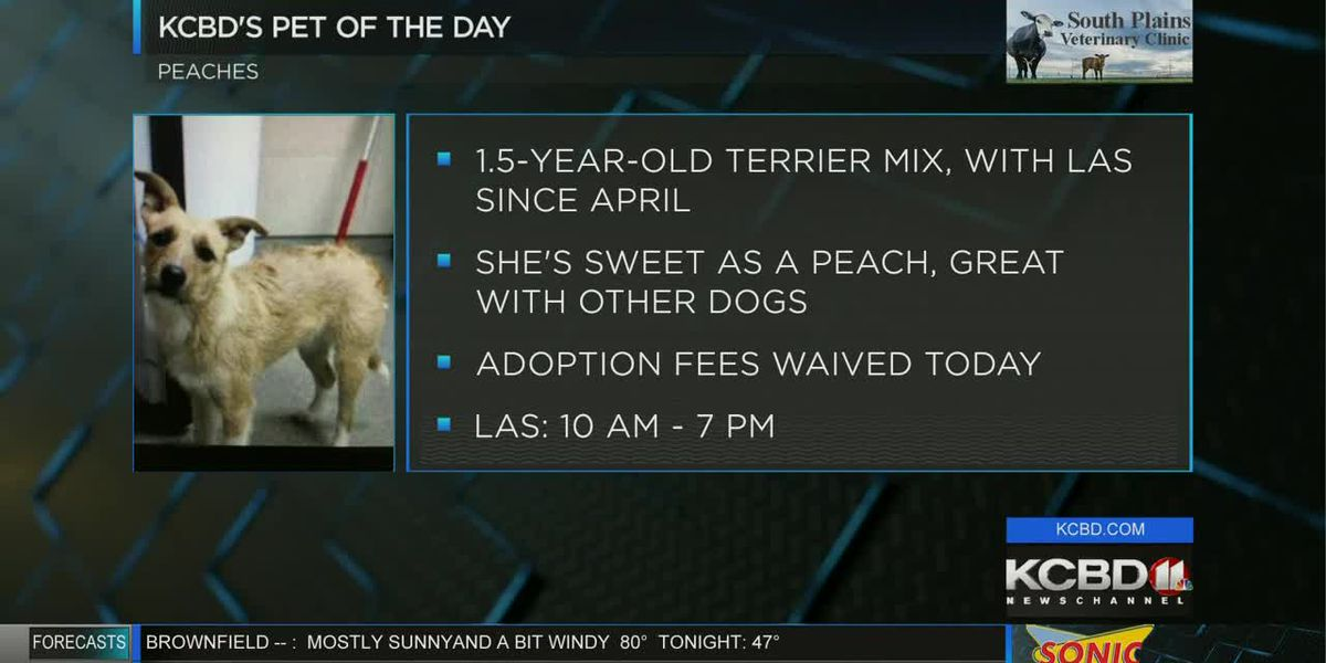KCBD's Pet of the Day: Meet Peaches