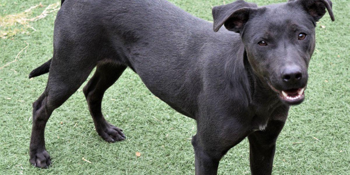 KCBD's Pet of the Day: Meet Ollie