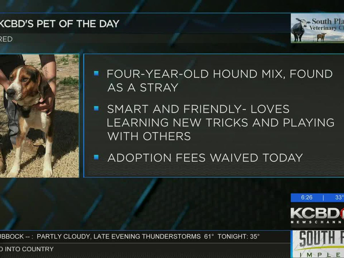 KCBD's Pet of the Day: Meet Red