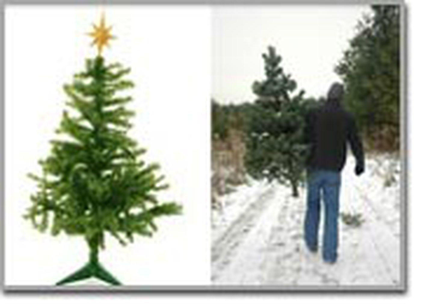 real vs fake christmas trees