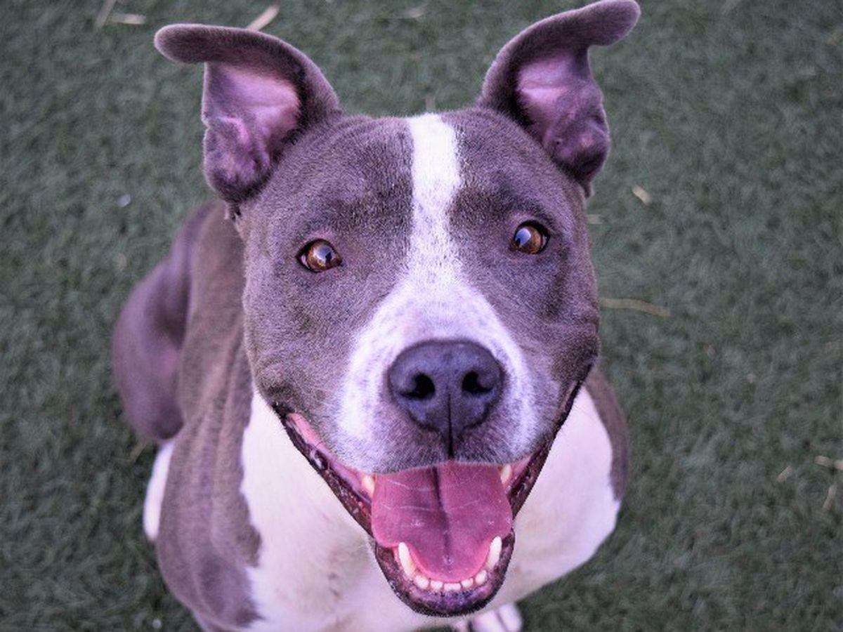 KCBD's Pet of the Day: Meet Suey
