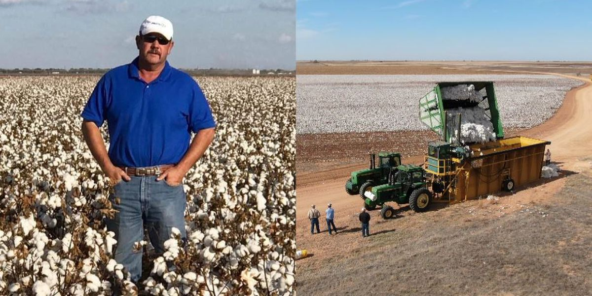 Harvest organized for crop of Texas farmer lost to COVID-19