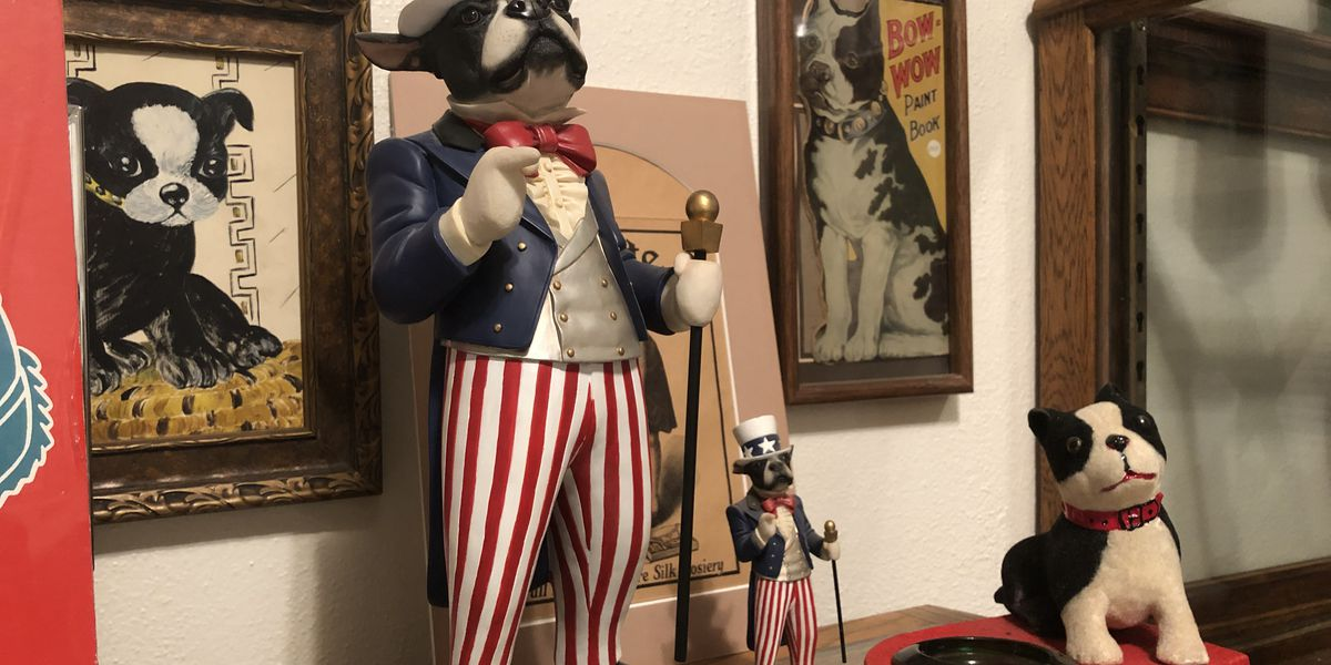 The hidden treasure of Floydada's Boston Terrier Museum